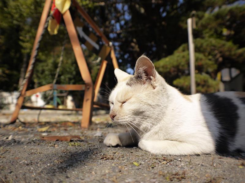 秋の日差しと薄三毛猫1
