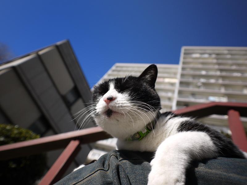冬陽射しが気持ち良い黒白猫1
