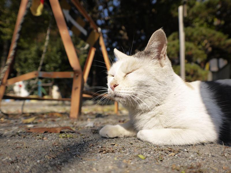 秋の日差しと薄三毛猫2
