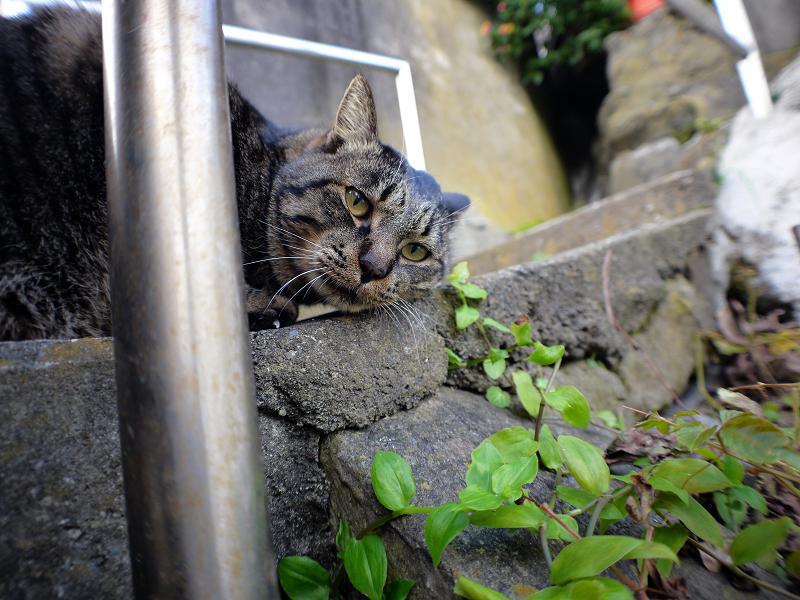 不思議階段とキジトラ猫1