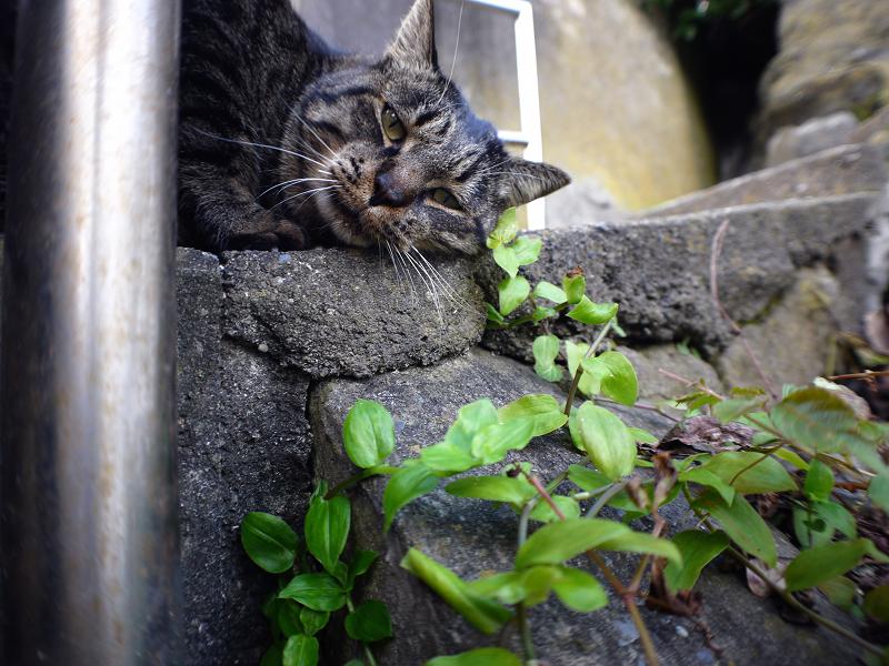 不思議階段とキジトラ猫2