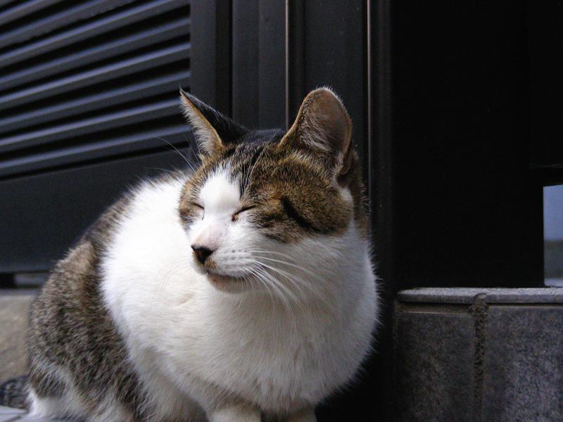 町なかキジ白猫2