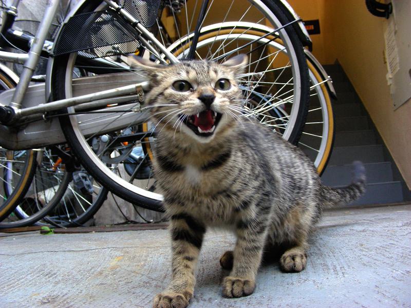 飲み屋街のキジトラ猫3