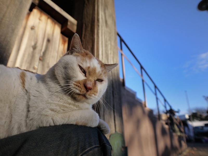 冬陽射し境内と茶白猫