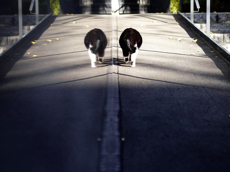 対称映り込みと黒白猫2