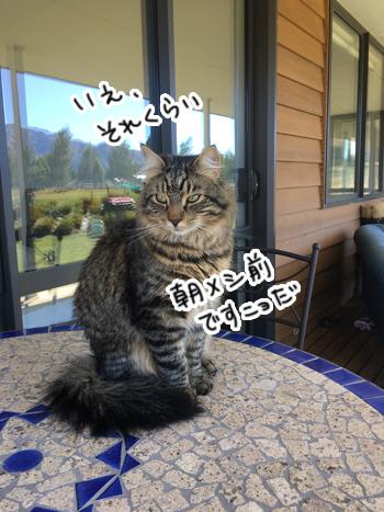 01022017_cat6.jpg