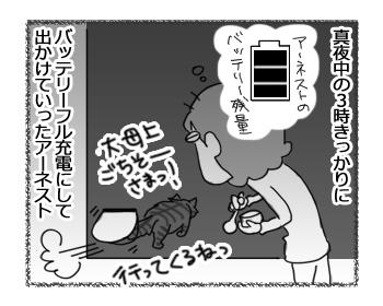 06022017_cat1.jpg