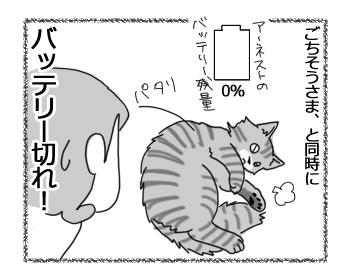 06022017_cat4.jpg