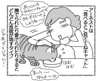 09022017_cat1.jpg