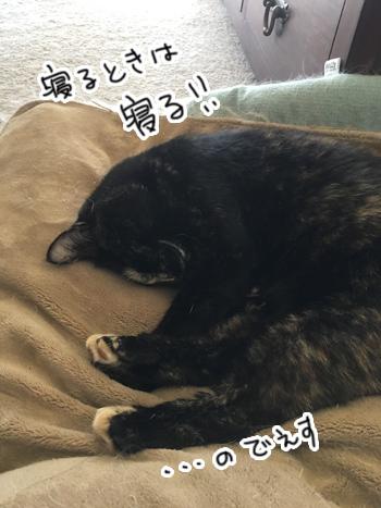 09022017_cat5.jpg