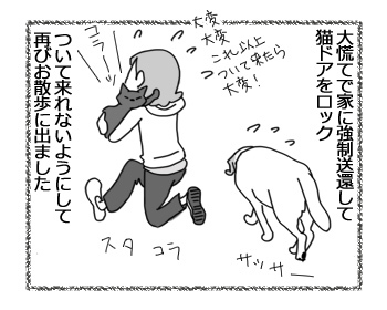 10022017_cat3.jpg
