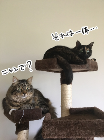 15012017_cat6.jpg