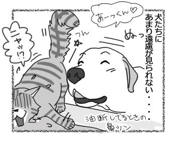 18012017_cat4.jpg