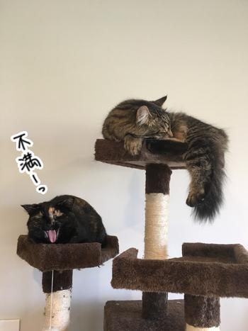 19012017_cat5.jpg