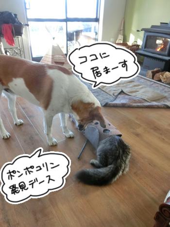 22012017_cat6.jpg