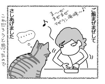 25012017_cat2.jpg