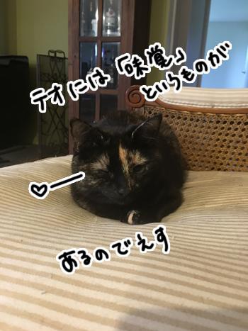 26012017_cat5.jpg