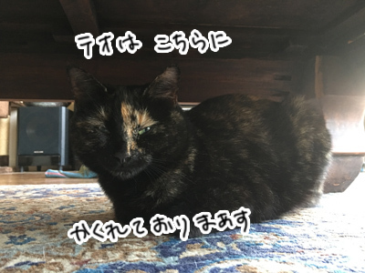27012017_cat5.jpg