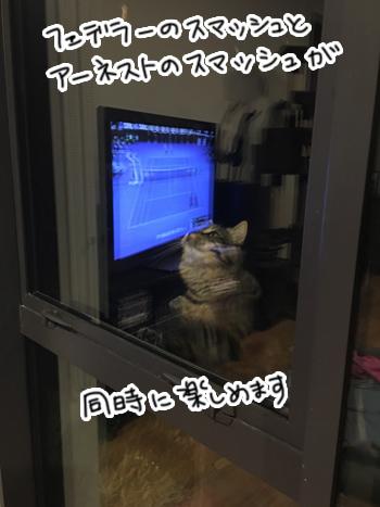 28012017_cat1.jpg