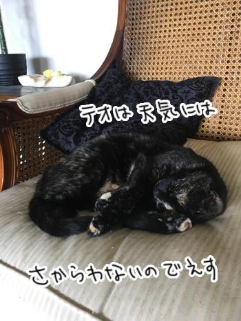 29012017_cat3.jpg