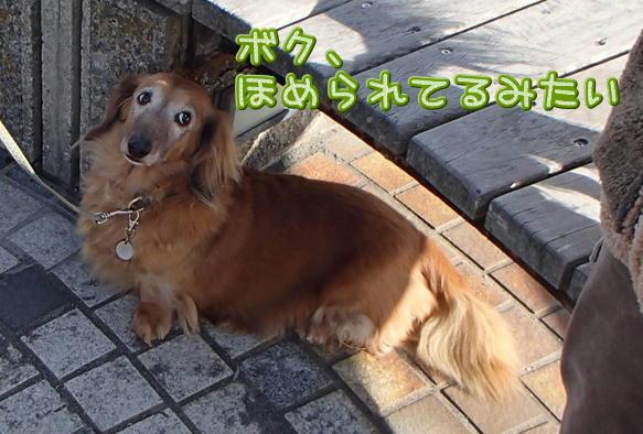 1_07_201612202153226e1.jpg