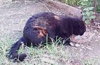 餌場に姿を現した頃の黒猫「ユウ」