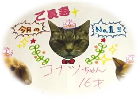 かかりつけの動物病院で、小夏は1月、16歳「最高齢猫」