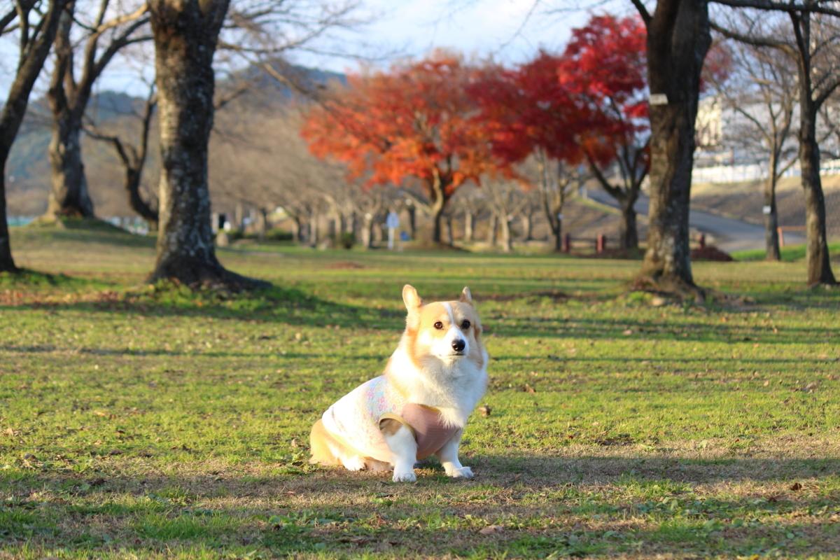 八木公園2