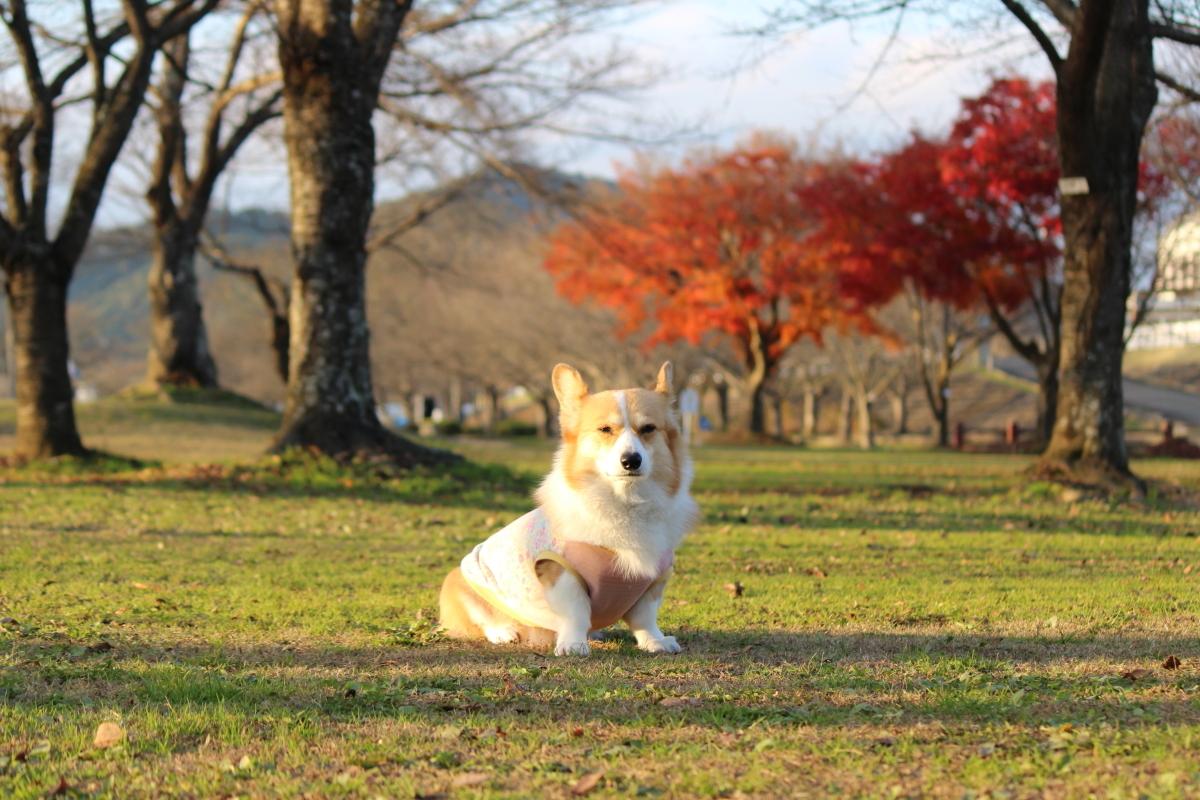 八木公園3