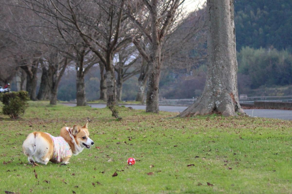 八木公園7