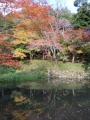 ②紅葉(池と紅葉)