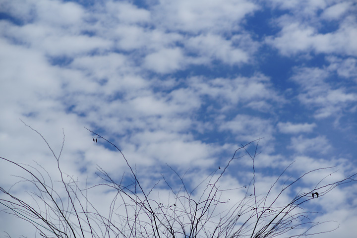 雲をつかむ