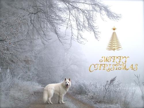 Christmas 2016a