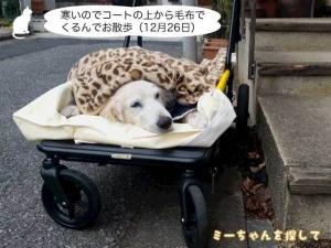 寒いのでコートの上から毛布でくるんでお散歩(12月26日)