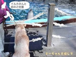 イルカさんと 初のご対面