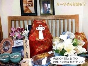 先逝く仲間 とお花やお菓子に囲まれたケフィ