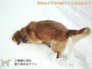ご機嫌に雪を掘り進めるケフィ