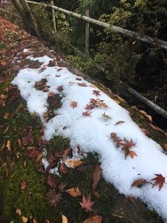 雪の名残1