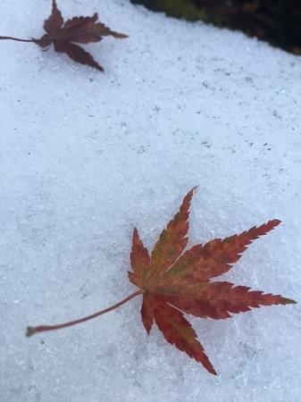 雪の名残2