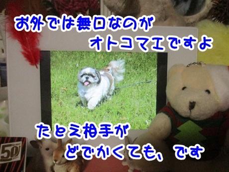 1119-03_20161119191234269.jpg