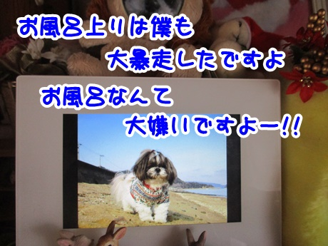 1211-10_2016121119513656d.jpg