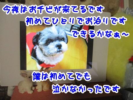 1223-05_20161223195943a5c.jpg