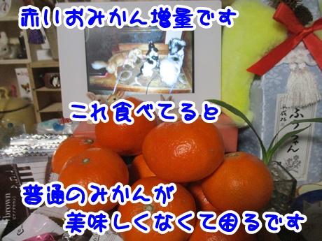 1226-06_20161226194235d2c.jpg