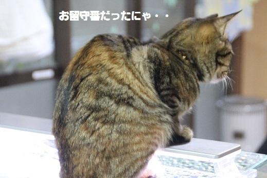 ジラちゃんのお店 2016-12-30-13