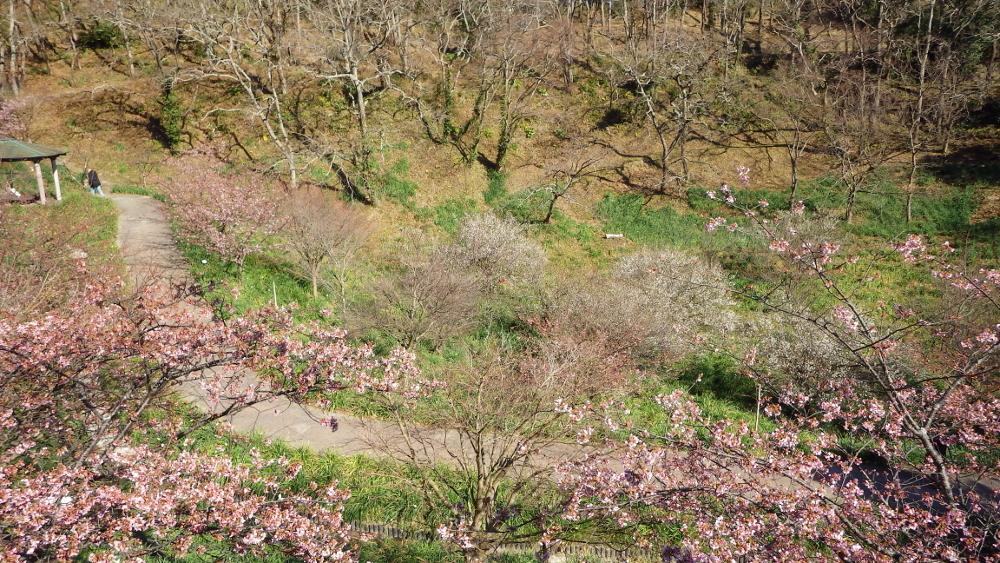 2佐久間ダム梅も桜も満開