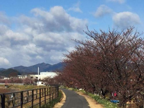 2.6山の手桜