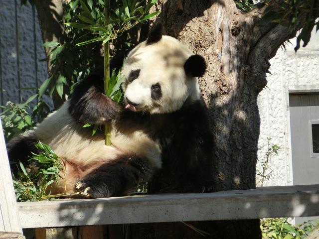 動物園王子 046