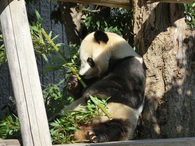 動物園王子 048