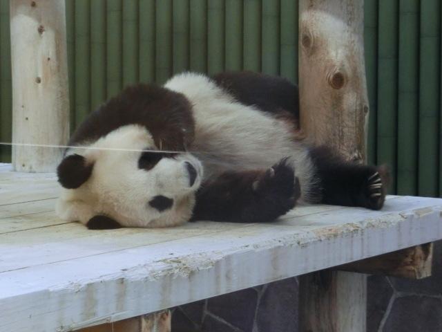 動物園王子 267