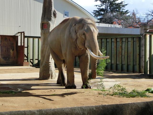 動物園王子 032